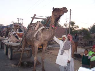 Nindu Temple Camel 2